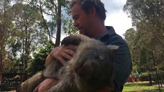 "George the Wombat Follows ""Surrogate Mum"" Tim Faulkner Around"