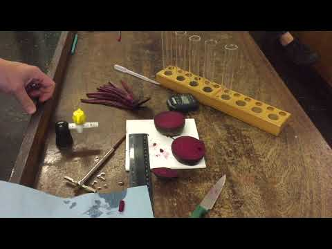beetroot cell membrane permeability experiment The fluids outside the cell are water based solutions, so the cell membrane or plasma membrane forms a barrier between them  cellular membranes experiment .