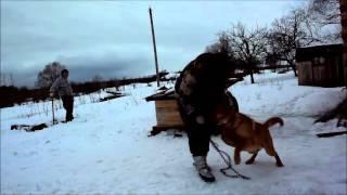 Выхи в П-Л: собаки, басма в казане и 8 марта