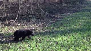 Mississippi Delta Black Bears