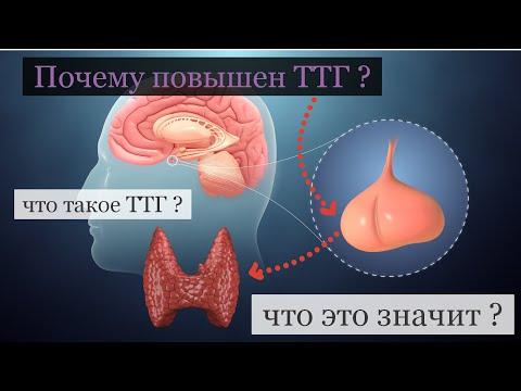 почему повышен ТТГ и что это значит ?