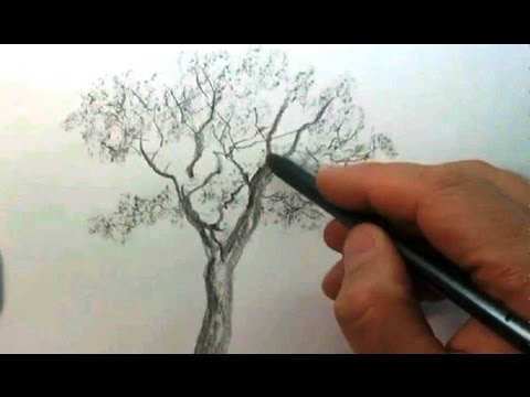 Как нарисовать осень карандашом поэтапно