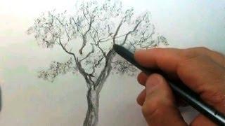 КАК научиться РИСОВАТЬ. Рисуем ДЕРЕВО карандашом #1(Полный курс