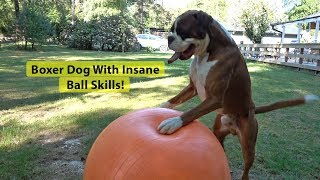 Boxer Dog With Insane Ball Skills! FIFA World Cup Soccer ⚽ 2018