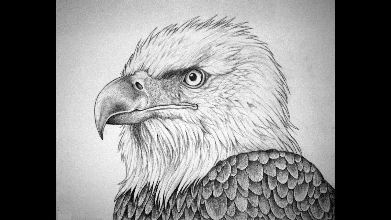 How to draw bald eagle head pencil drawing step by step