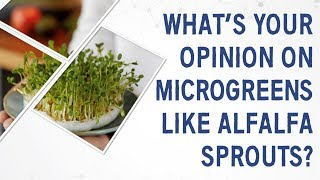 Ask Dr. Gundry: What's your opinion on microgreens like alfalfa sprouts?