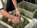 Brandy Farms Stuffed Hams