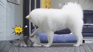 Dog And Cat Are Best Friends Ever!!