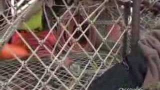 Deadliest Catch - How Crab Pots Work