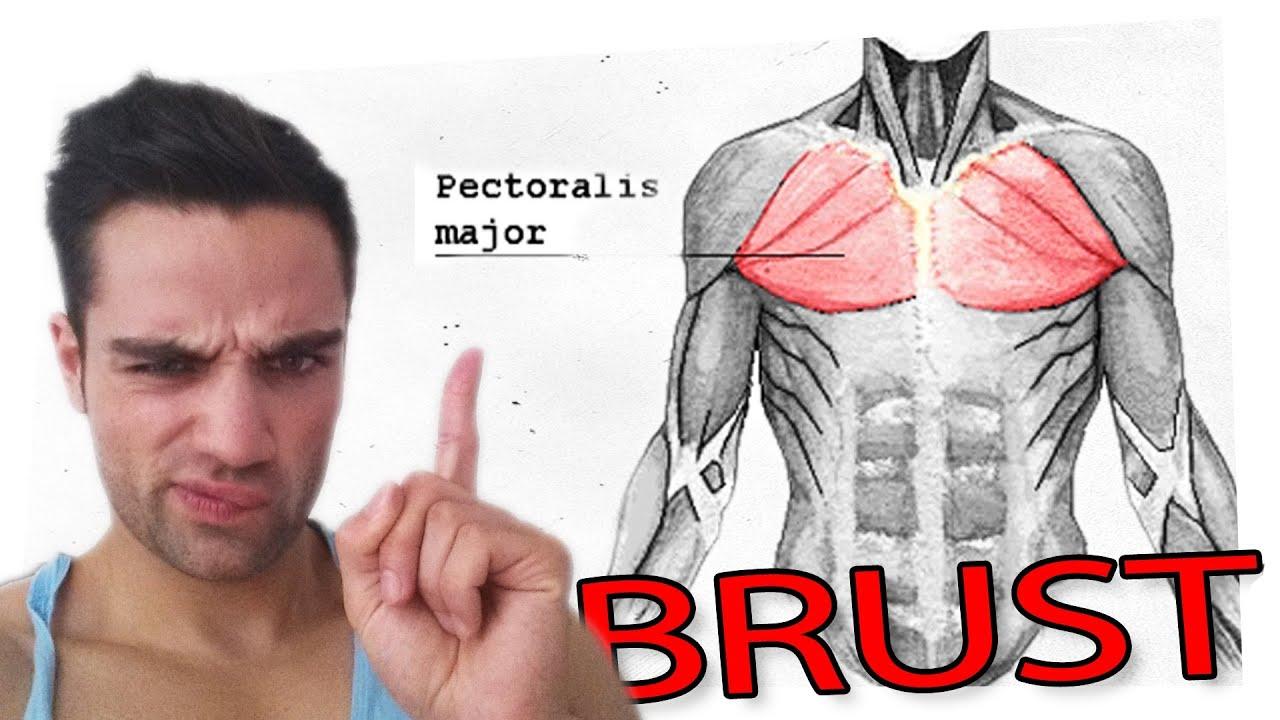 Brustmuskulatur anteilig trainieren - YouTube