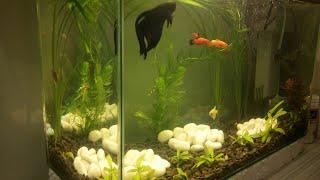 Мой аквариум на 20 литров