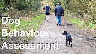 Dog Behaviour Assessment in Public. Patterdale Terrier. With Dog Expert Witness, Nick Jones MA