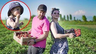 მარწყვის კრეფა კირასთან ერთად – Family Vlog