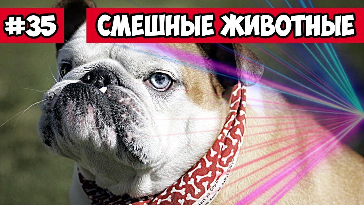 Японка Мики о проблемах в России. Почему русские говорят, что в .