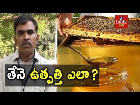 Honey Production | Honey Bee Farming | hmtv Agri