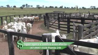 FAZENDA À VENDA NO PONTAL DE RIO VERDE / MS COM 1.200 HECTARES DESTAQUE