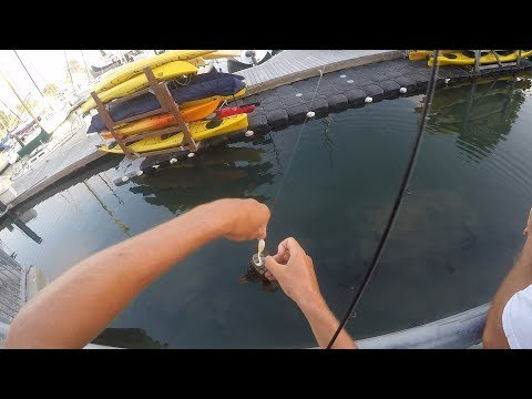 SANTA CRUZ HARBOR POKE POLLING WITH SWIMBAITS AND JIGS