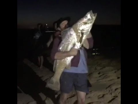 BaGGed Out Ep. 2 - Jewfish (Mulloway) On Livebait
