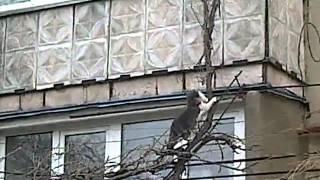 Кошка прыгая по веткам заносит котят в дом