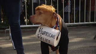 Costumed canines strut their stuff at Halloween Dog Parade