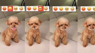Cute Puppy Emoji Reaction On Our Face    #Youtubeshort