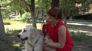 В Чите за выгул собак без поводка и намордника не наказывают