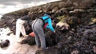 Lush Buying Presents: Local Seaweed Buying Trip