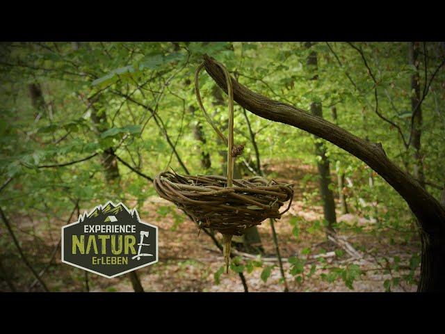 Bushcraft  Korb flechten in 25 Minuten -  Do it Yourself  im Wald! Körbchen flechten aus Haselnuss