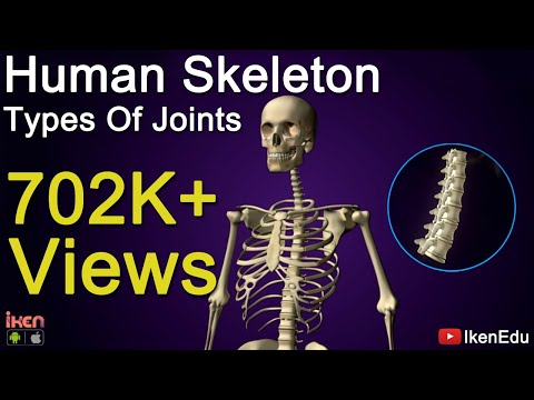 Biology Video: Learn about Human Skeleton