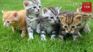 Funny cats meowing || cat funny sounds || crazy animals