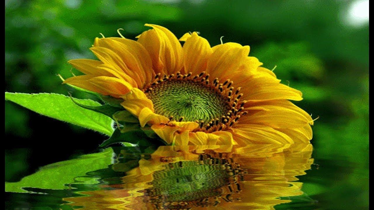 Pensamentos De Bom Dia: Meus Pensamentos ♥¸.•*¨♥ ♥ Bom Dia!♥¸.•*¨♥ ♥Com Uma Linda