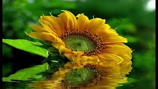 ♥✿♥ Bom dia – Com uma linda mensagem de luz,amor e carinho♥¸.•*¨♥