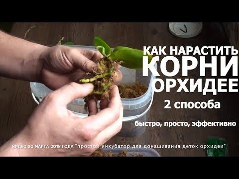 СГНИЛИ КОРНИ у ОРХИДЕИ 2 способа как нарастить корни орхидее быстро и эффективно