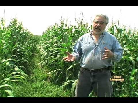 Що краще: генно-модифіковане чи органічне фермерство?