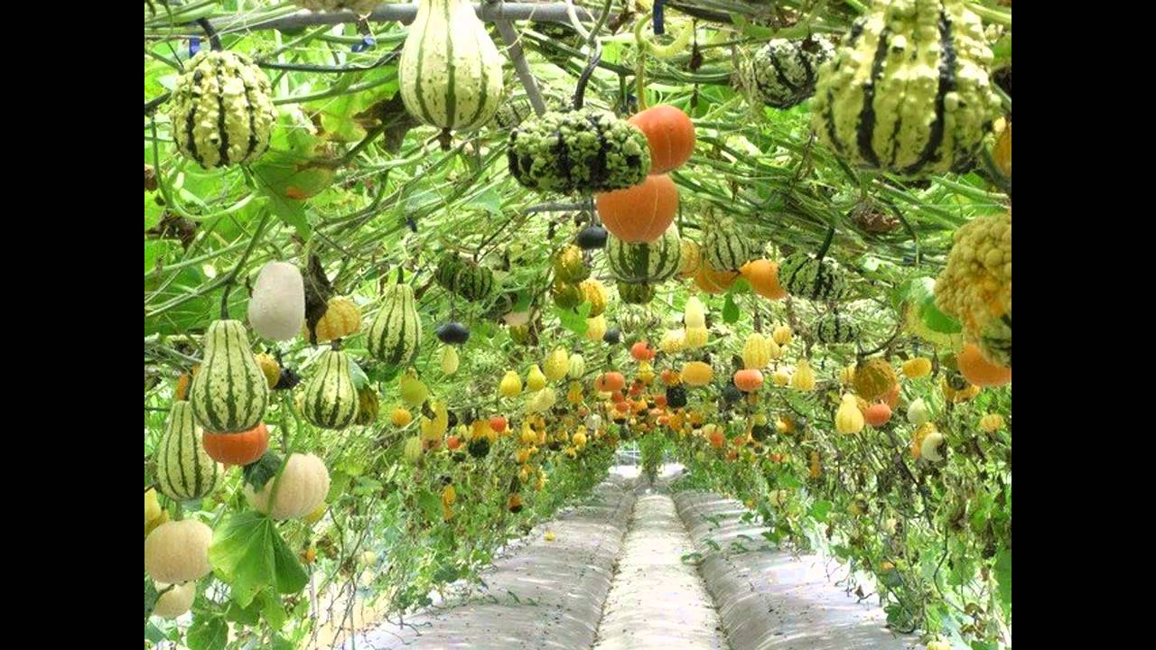 Home vegetable garden ideas - YouTube
