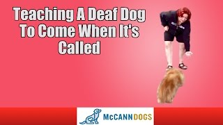 Teaching A Deaf Dog To Come When It's Called