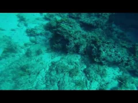 Scuba Diving in Jupiter,Florida.