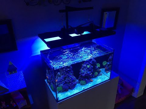 Red Sea Reefer 250 | Advance Gyre Settings - Gyre 230 | Reef Tank Flow | How I Do it!