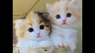 😻 Самые милые существа в мире 🐈 Подборка смешных котят для хорошего настроения 😸