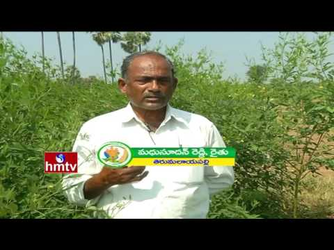 Inspirational Farmer In Warangal | Huge Profits In Cotton Farming | Nela Thalli | HMTV