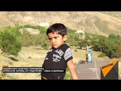 Маленького индуса покорили армянские коровы, а его родителей   Севан