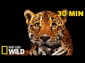 Compilation Best Of Wild - 30 Minutes