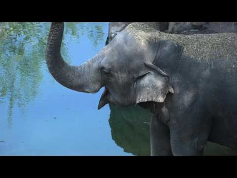 Earth Optimism: Elephants