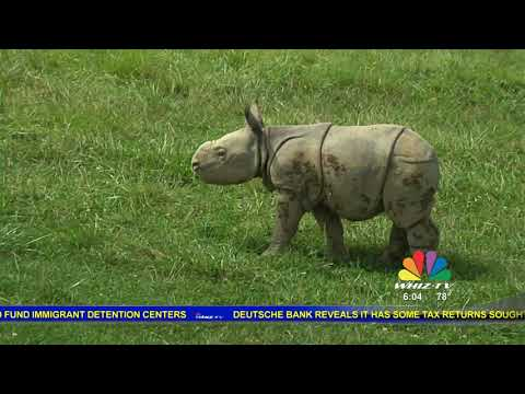 Matt Kinchla Wilds Baby Rhino