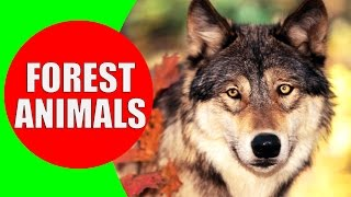 Forest Animals for Kids - Children Learn Temperate Forest Animal Sounds & Animals of the Forest