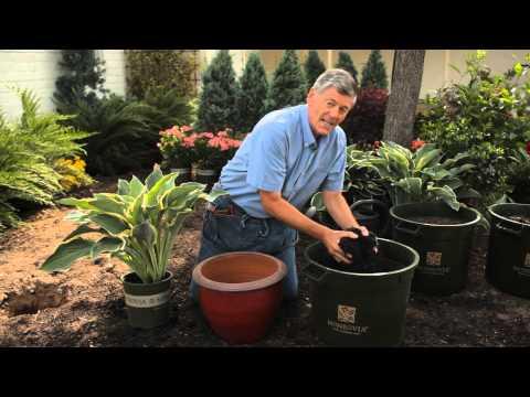How to Plant Container Hostas : Garden Savvy