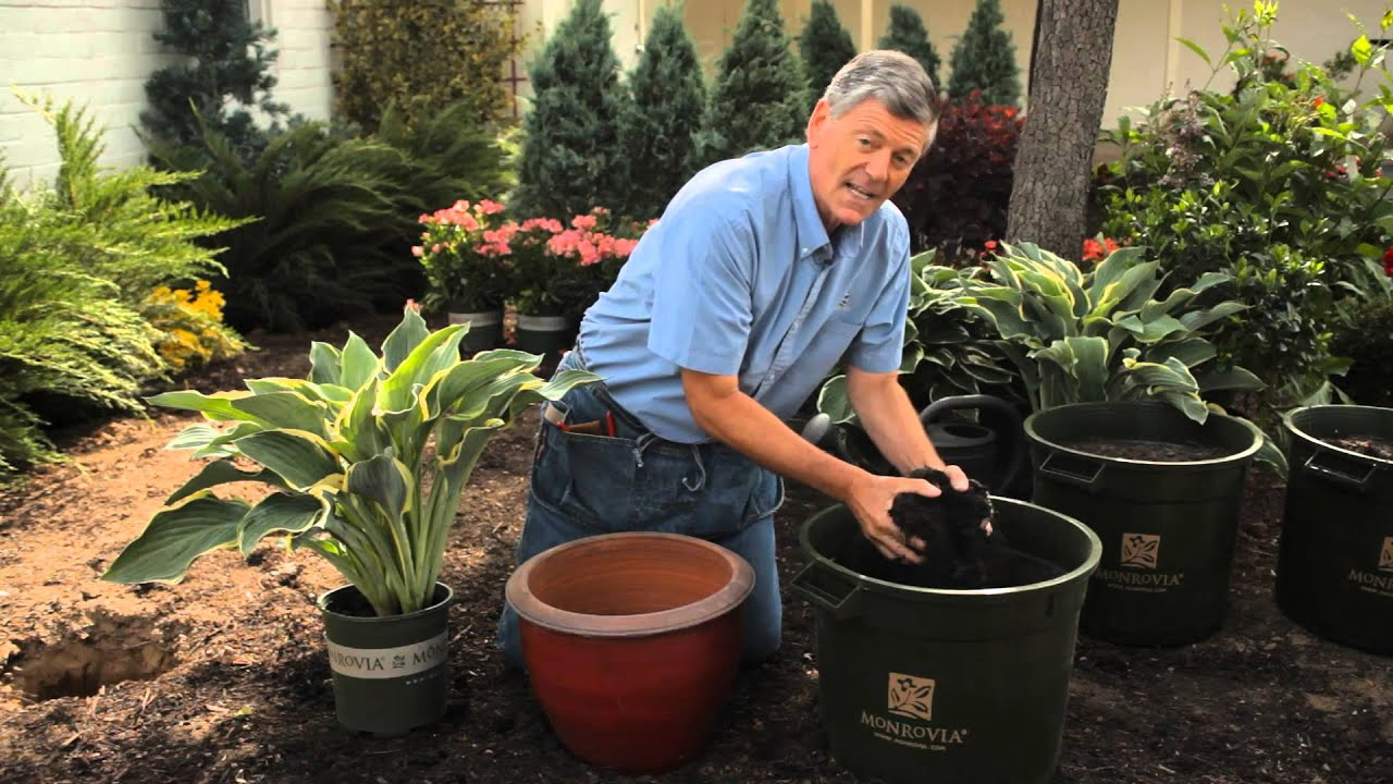 How to Plant Container Hostas : Garden Savvy