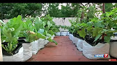Horticulture do it yourself 2015 16 youtube 639 solutioingenieria Image collections