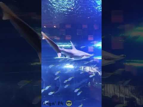 #Amasing Fish aquarium   #Dubai mall   #Shorts   #UAE   #Dubai   #UngalPk😎   #Tamil
