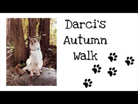 Balinese Cat Darci's Autumn Walk